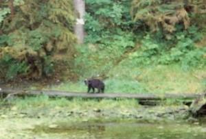P.O.W. Bear